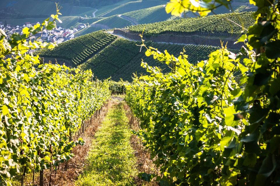 Besuch von der Wandergruppe Bad Bellingen